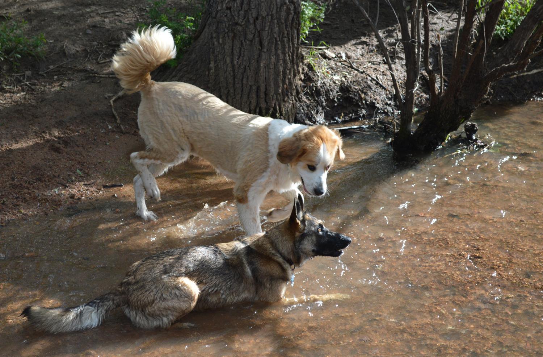Dogs at Bear Creek Dog Park / FOX21 News file photo