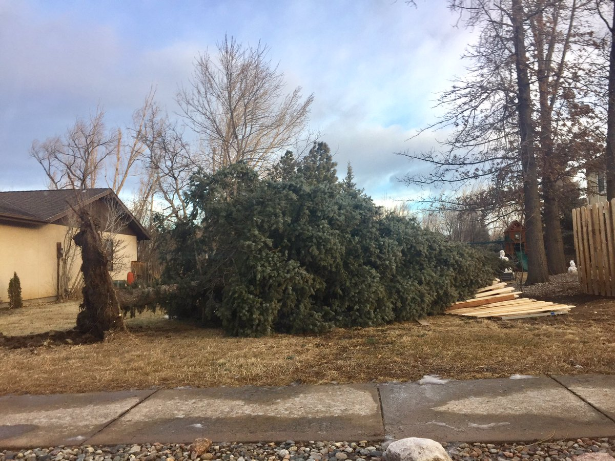 A tree and fence knocked down by wind in southwestern Colorado Springs. _ Joe Cole - FOX21 News_214735