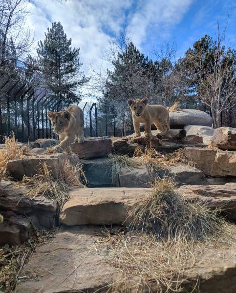 Pueblo Zoo.JPG