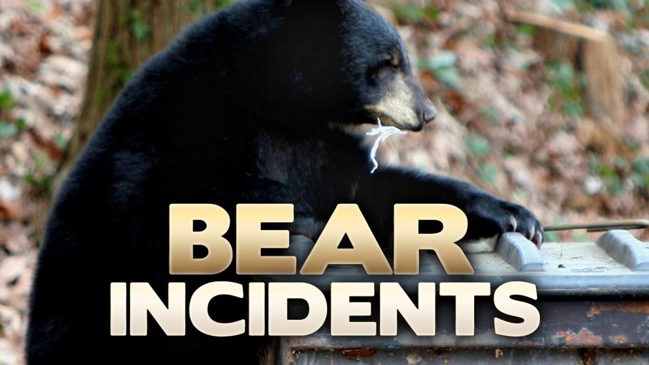 bear alert bear incidents graphic 16x9