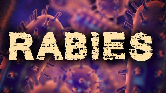 rabies disease rabid graphic 16x9