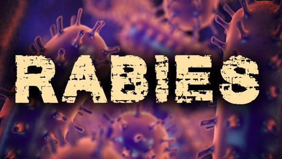 rabies disease rabid graphic 16x9