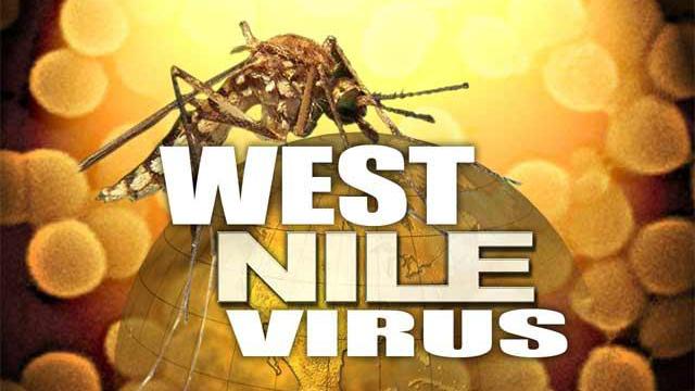 westnile west nile virus 16by9
