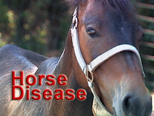 sickhorse.jpg_52754