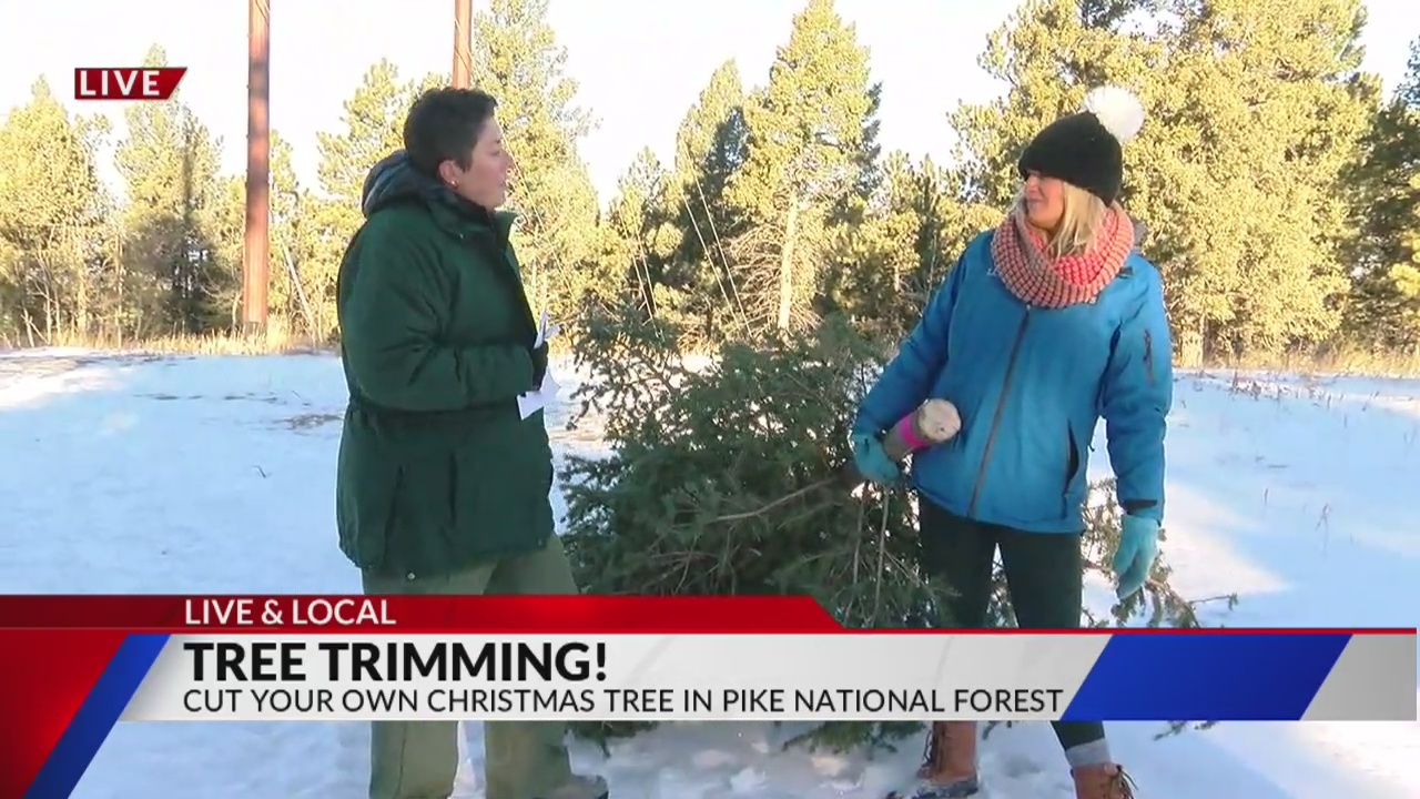 Cut down your own Christmas Tree with Pikes Peak Ranger District in Pike National Forest Live & Local on FOX21 Morning News
