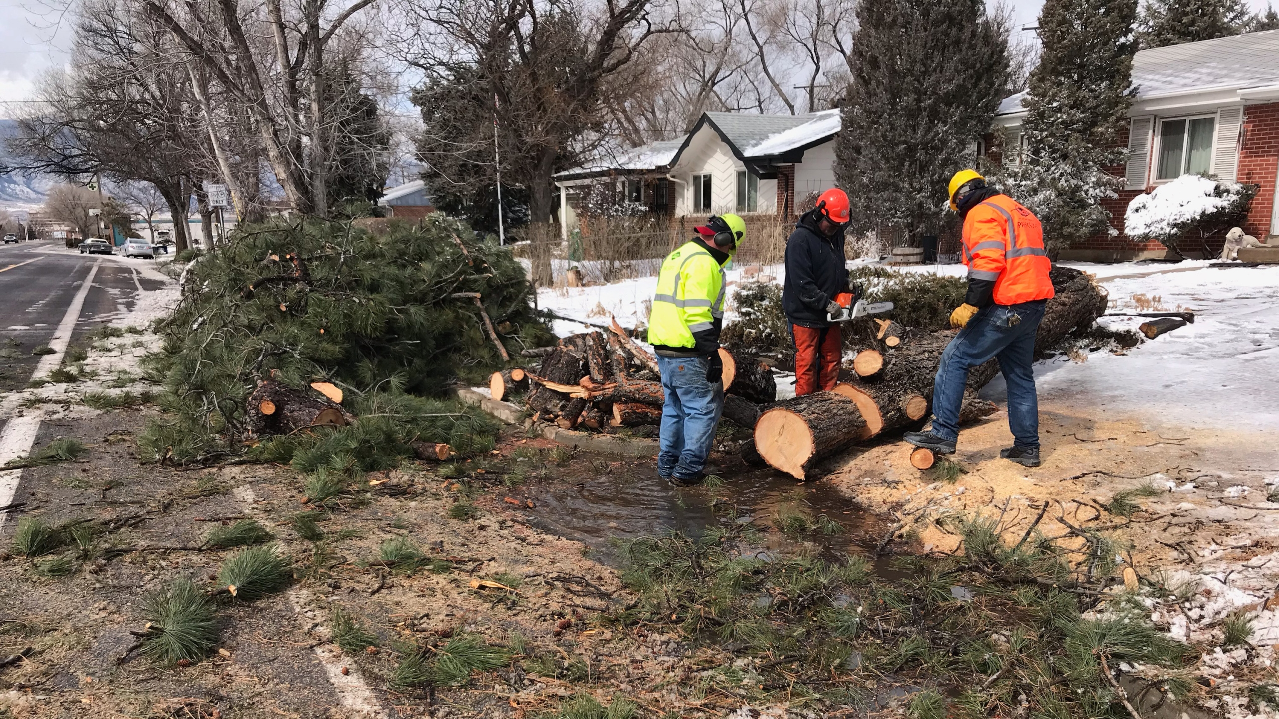 Colorado Springs Parks, Recreation and Cultural Services employees clear a fallen tree from the area of Bijou Street east of downtown Colorado Springs