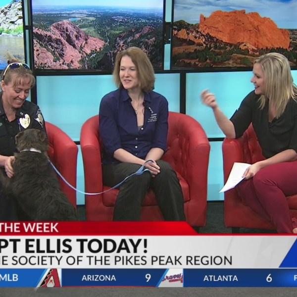 April 17 Pet of the Week: Ellis