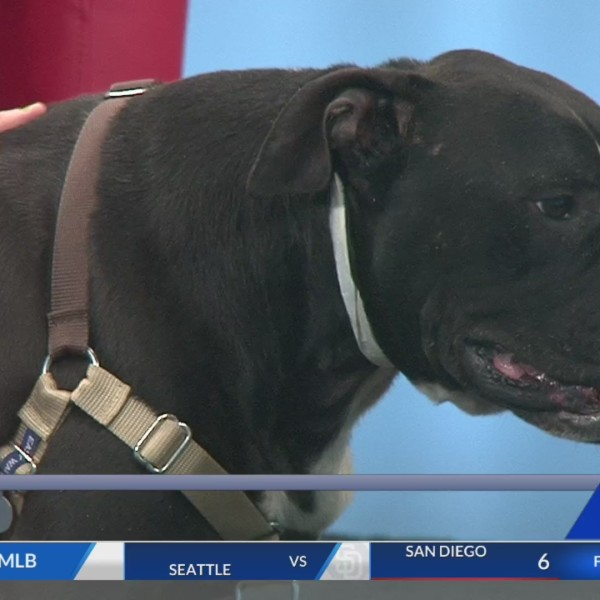 April 24 Pet of the Week: Zoey