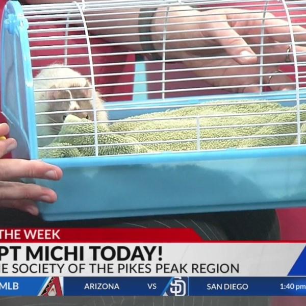 May 22 Pet of the Week: Michi