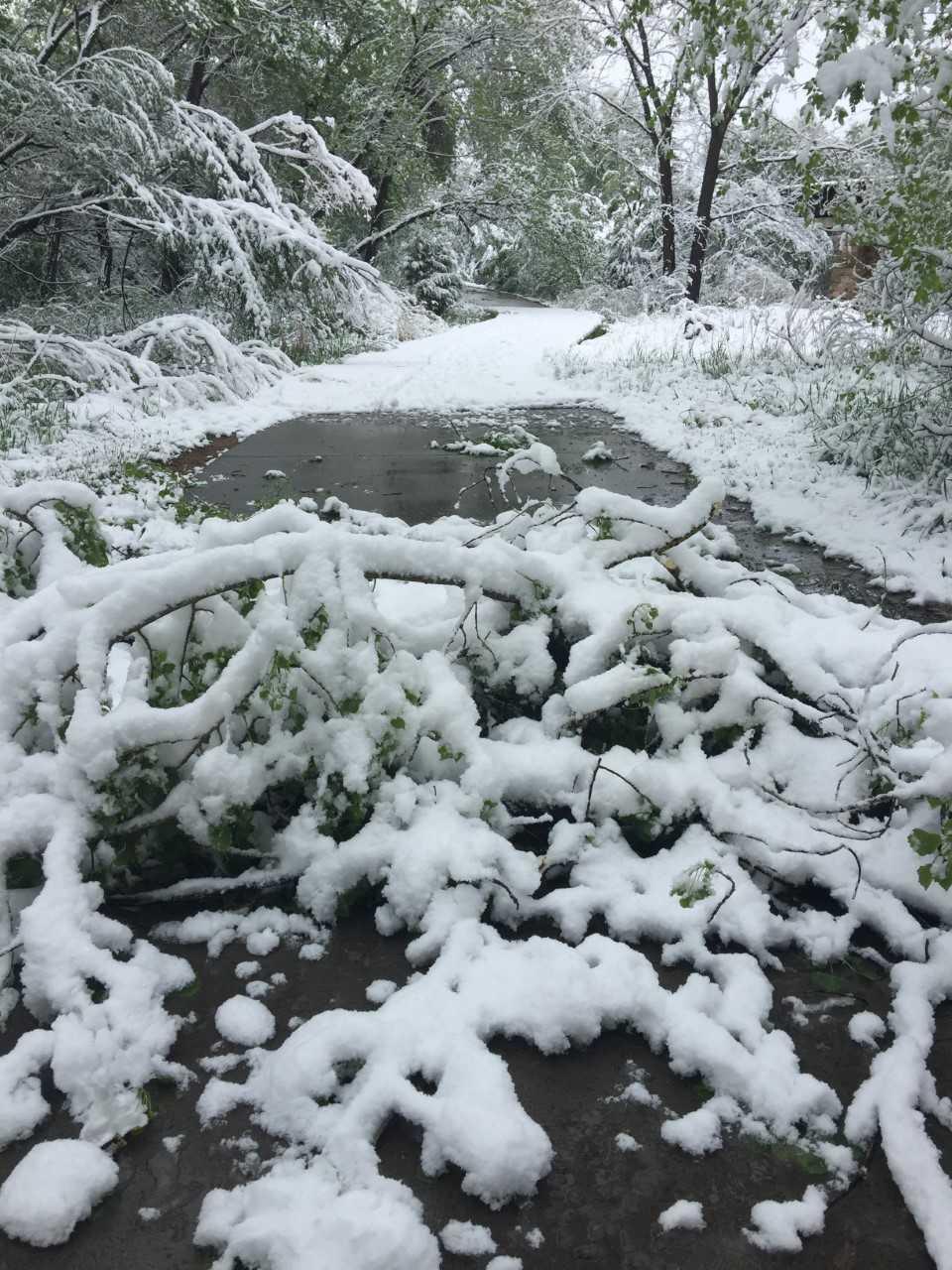 snowy tree_1558459397427.jpg.jpg
