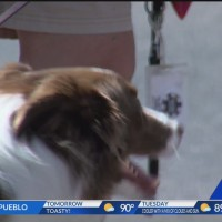 Colorado Springs 5K benefits All Breed Rescue and Training
