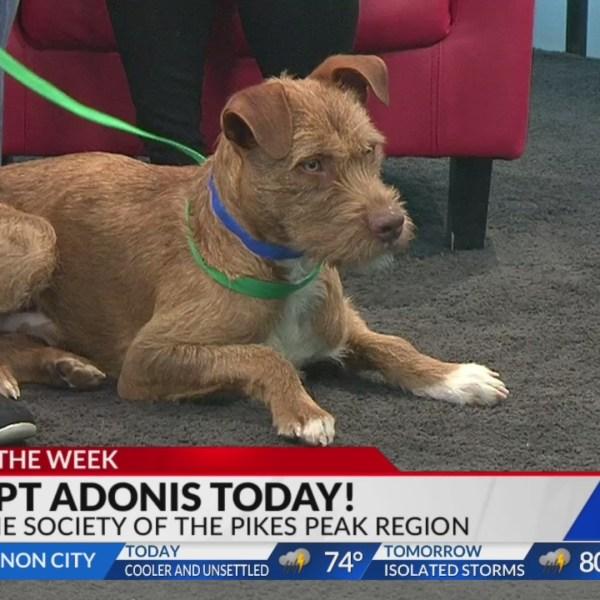 June 5 Pet of the Week: Adonis