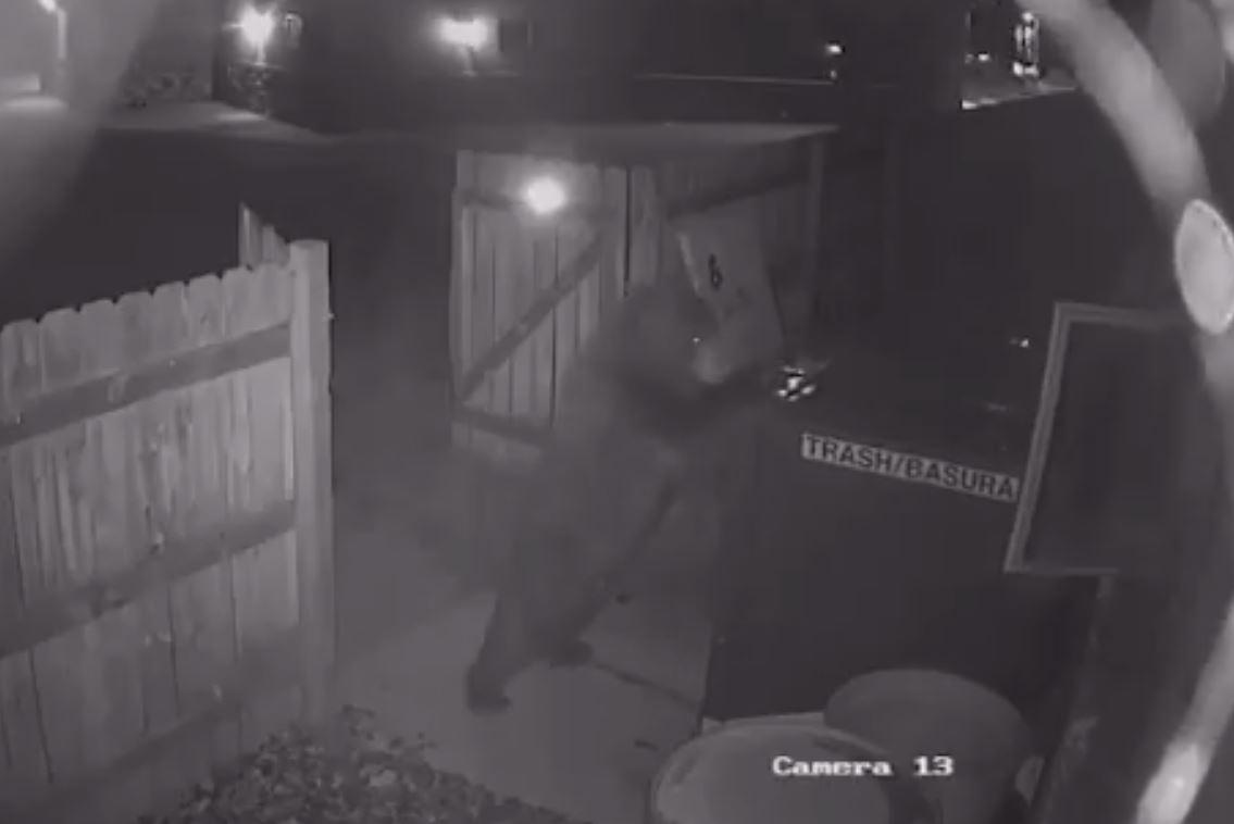 bear dumpster