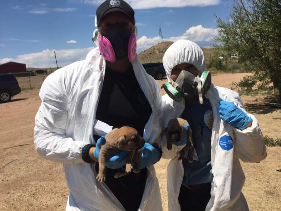 An El Paso County Sheriff's Office lieutenant and a Humane Society of the Pikes Peak Region officer rescued five puppies from underneath a trailer home Wednesday. / Photo courtesy El Paso County Sheriff's Office