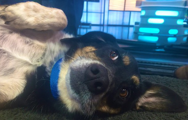 September 25 Pet of the Week, Nelson / Photo by Sam Widmer - FOX21 News