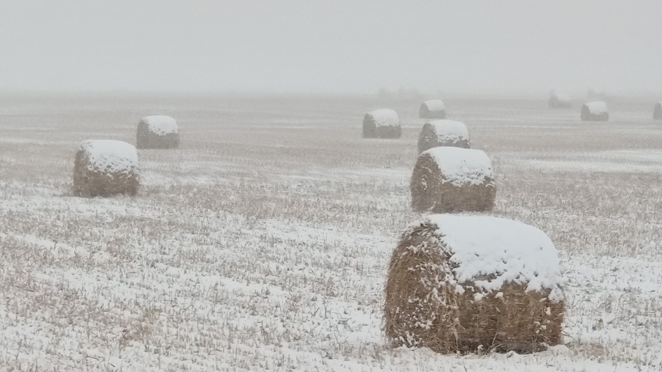 Frosted hay bales in Yoder Monday. / Photo by FOX21 viewer Kira Lynn Morrill