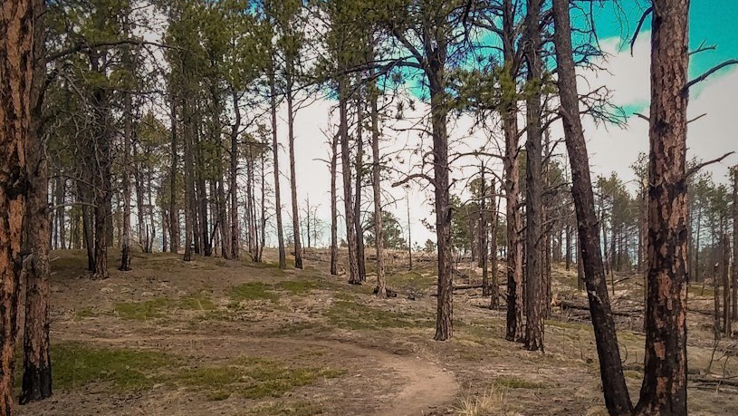 The trail in the new Pineries Open Space / Photo courtesy El Paso County Parks