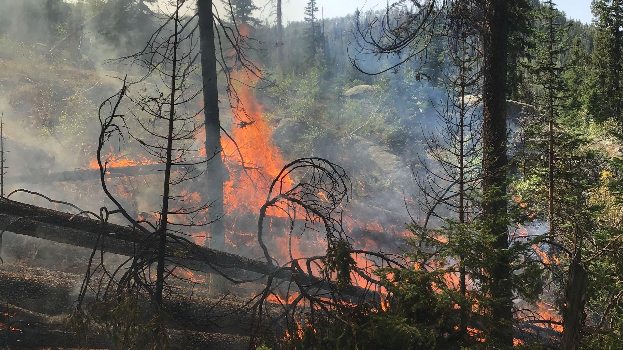 Flames consuming a pocket of dead and down timber in the Middle Fork Fire on Monday, September 14. / Courtesy Middle Fork Fire Information