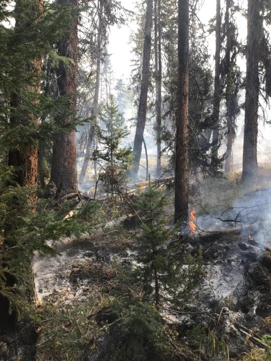 Fire creeps through a pocket of timber in the Middle Fork Fire on Sunday, September 14. / Courtesy Middle Fork Fire Information