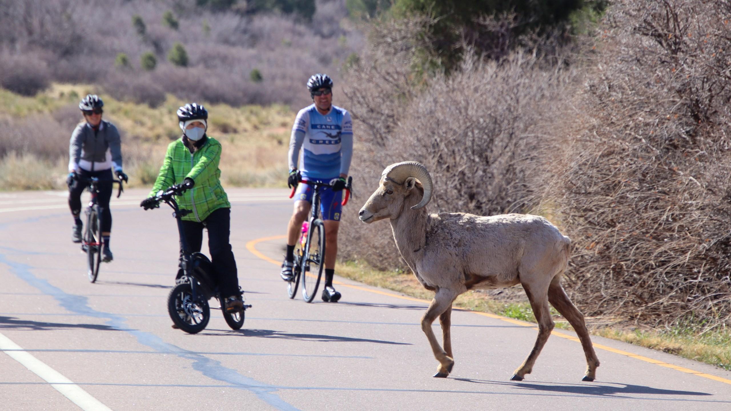 Motorless Morning in April 2021 / Photo courtesy City of Colorado Springs